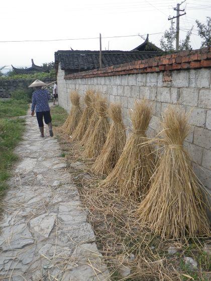 Drying harvest