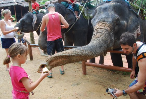 Emily feeds the elephant