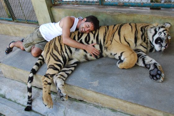 Simon cuddles a giant tiger