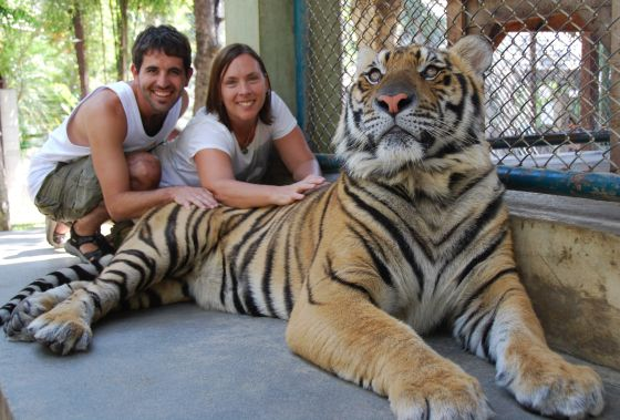 That is a BIG tiger