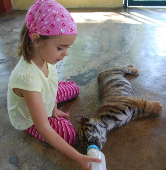 Feeding the baby tiger