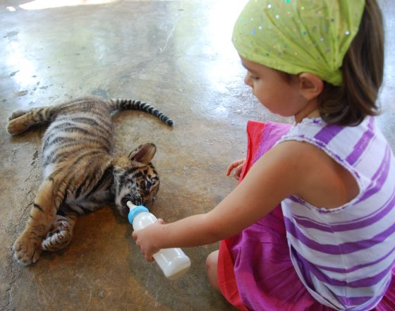 Maddie feeding the baby tiger