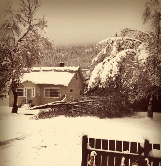 snow-branch